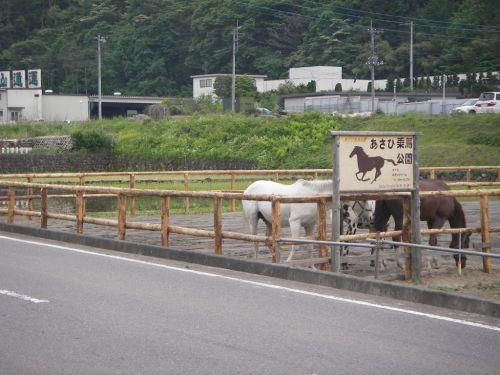 朝日乗馬公園