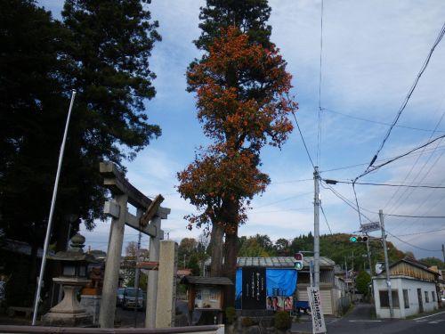 大きな柿の木