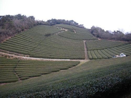 鷲峰山山頂付近の茶畑